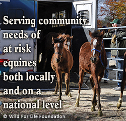 Serving Equine Community Needs