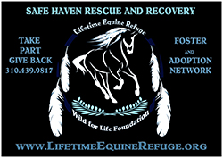 Safe Haven Network